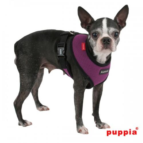 Puppiass14HSoft%2023-500x500.jpg