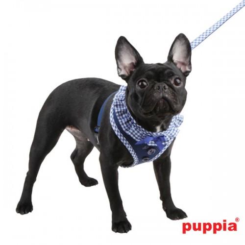 Puppiass14HVivien%205-500x500.jpg